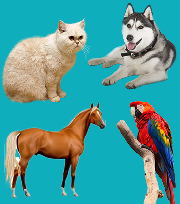 Pet Relocation | Pet Moving Services | Horse | Cat | Dog
